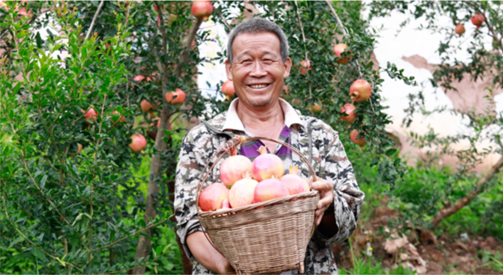 A pomegranate farmer selling his produce on Pinduoduo
